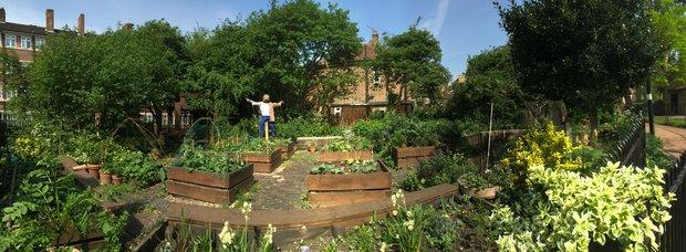 T&T edible garden